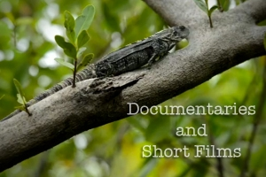 Short films and documentaries